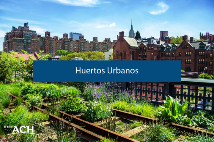 Huertos Urbanos. ¿Qué son y qué ventajas traen a la ciudad?