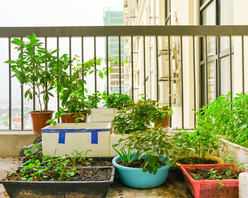 Huertos urbanos qu son y qu ventajas traen a la ciudad for Que plantas se siembran en un huerto